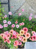 お花、緑たちが元気です