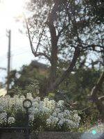 トリトラ・リエットのお庭